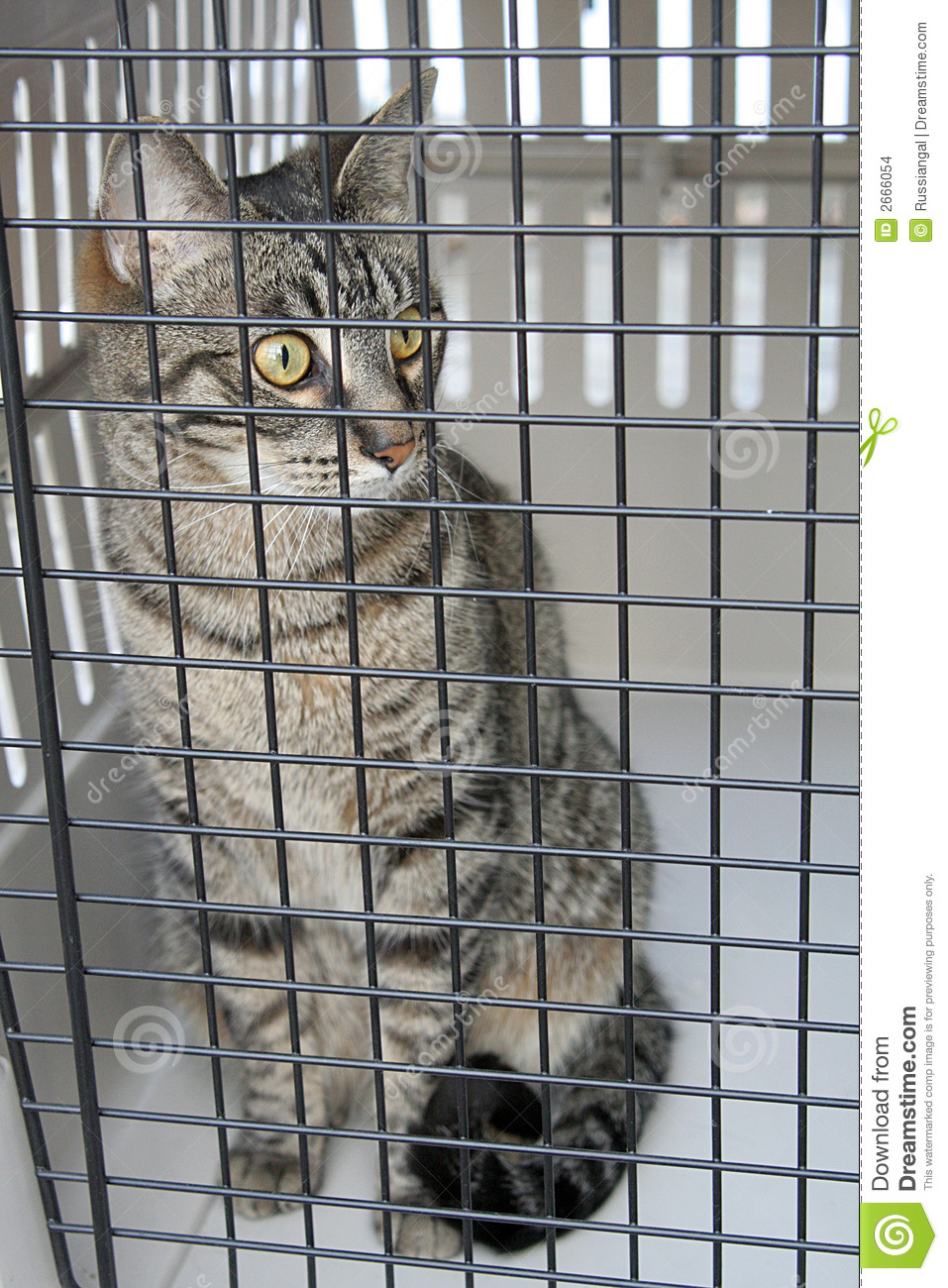 Cat In A Cage Stock Images Image 2666054