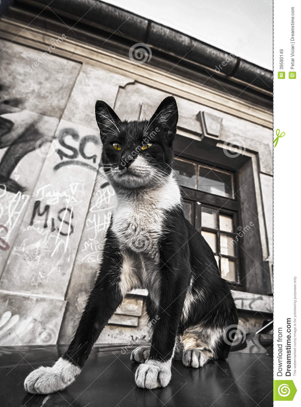 Cat On The Car And Street Graffiti On Old Wall Grunge