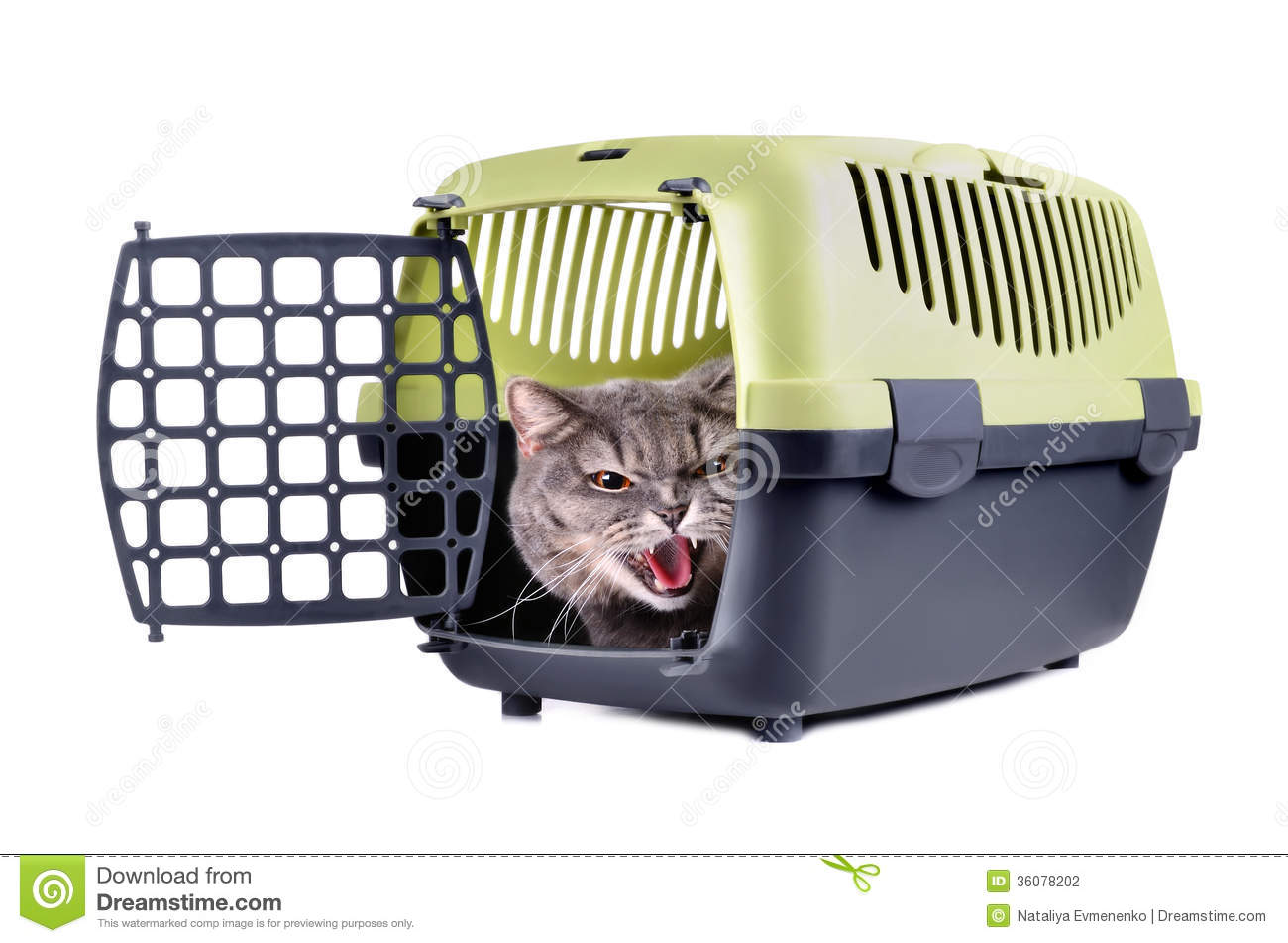 Getting Your Cat In A Carrier