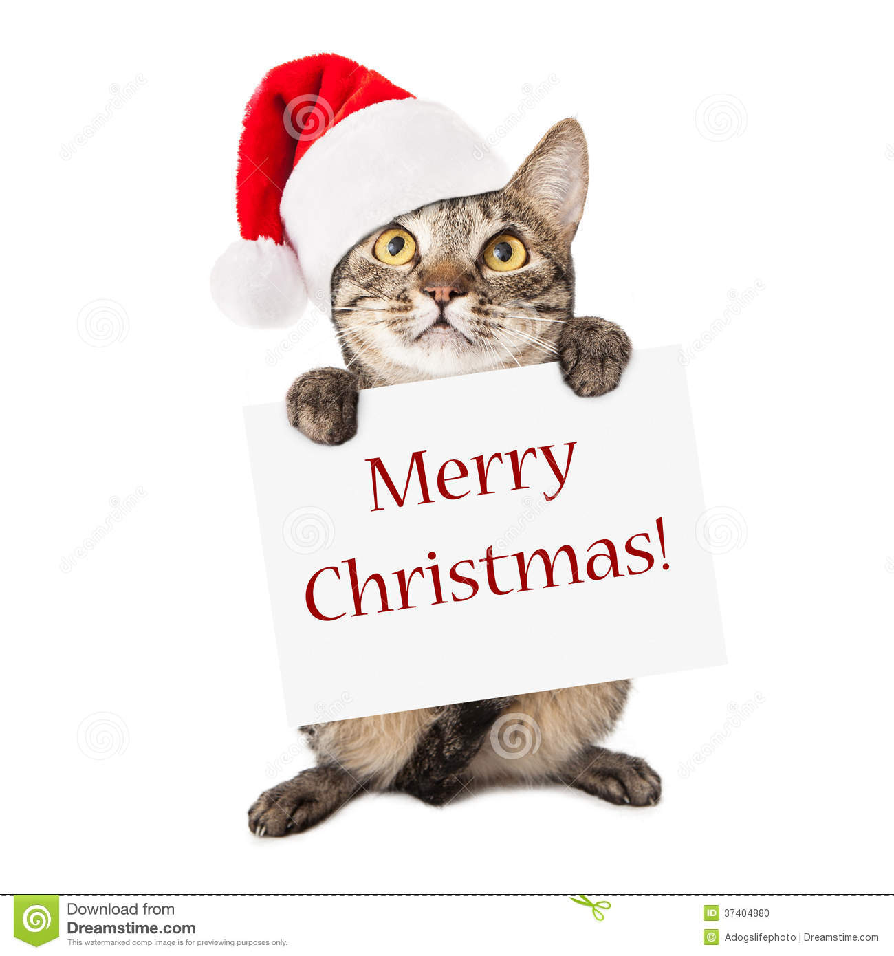 cat carrying merry christmas sign - Merry Christmas Cat