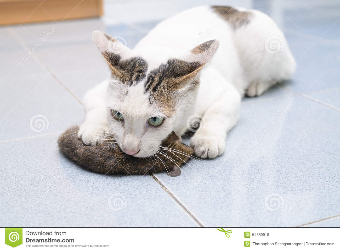 upper respitory infection in cats