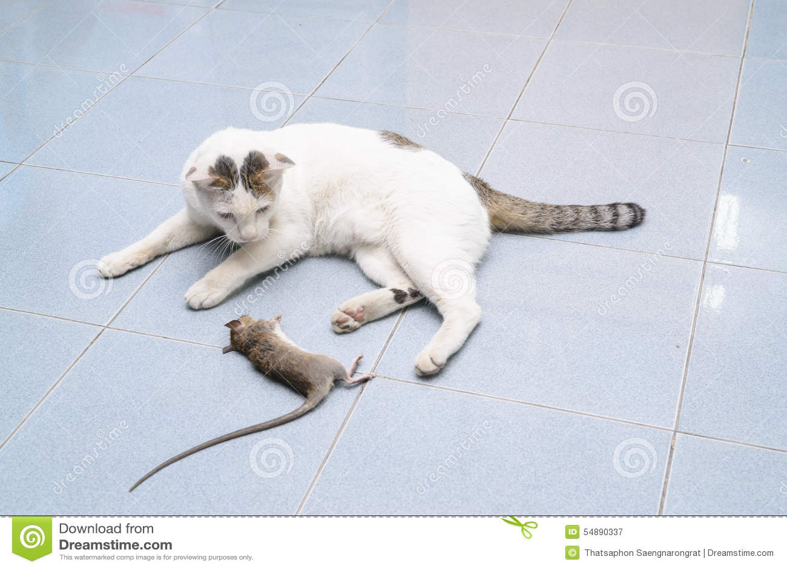 kitten broken leg symptoms