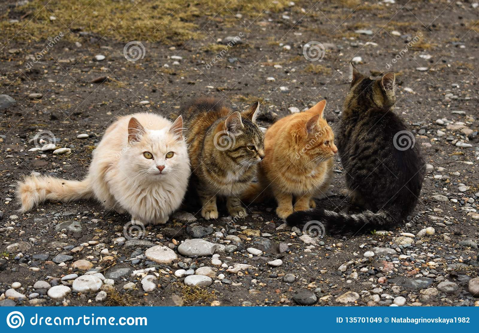 Cat cats pet kitten wild homeless stray animal