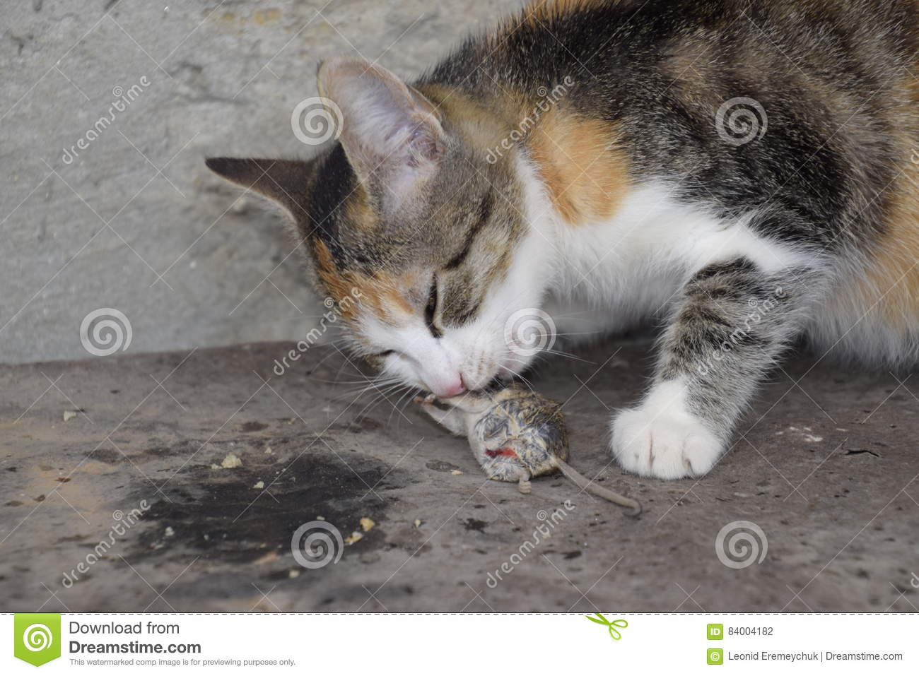 Cats Eating Mice Danger