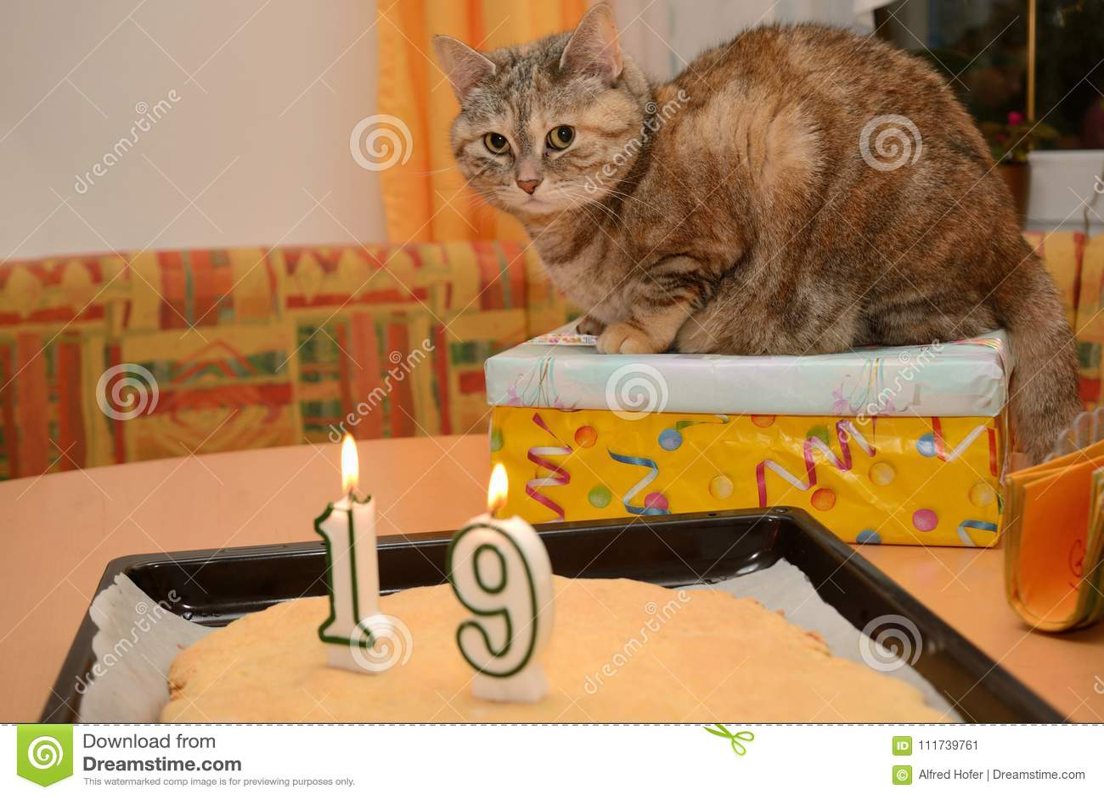 Cat celebrates birthday - presents for cat