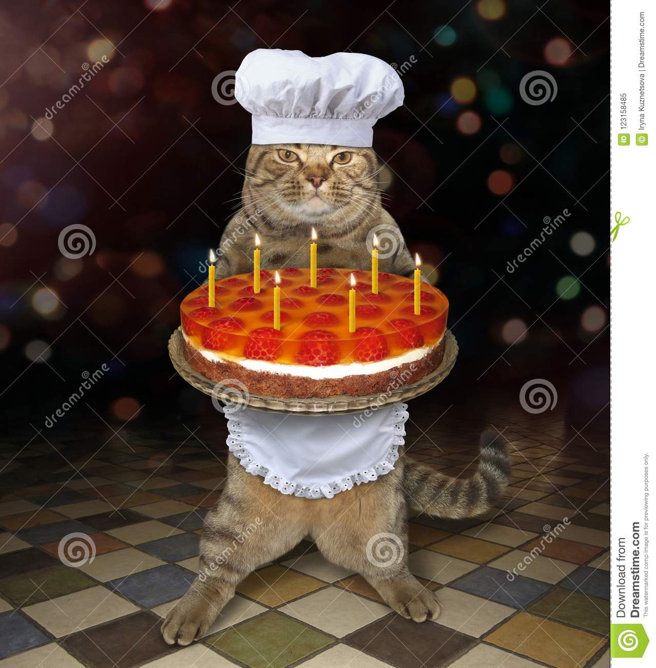 Cat Holds A Birthday Cake With Candles Stock Image Image Of Cake