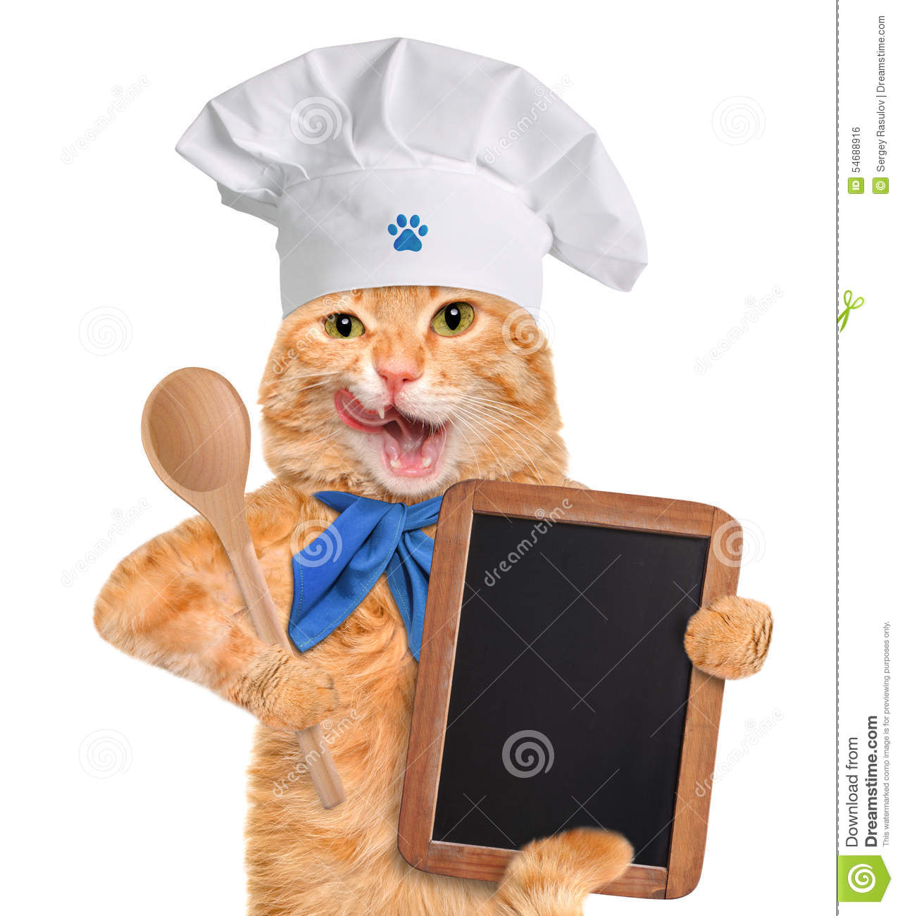 Best Dry Food Young Cat
