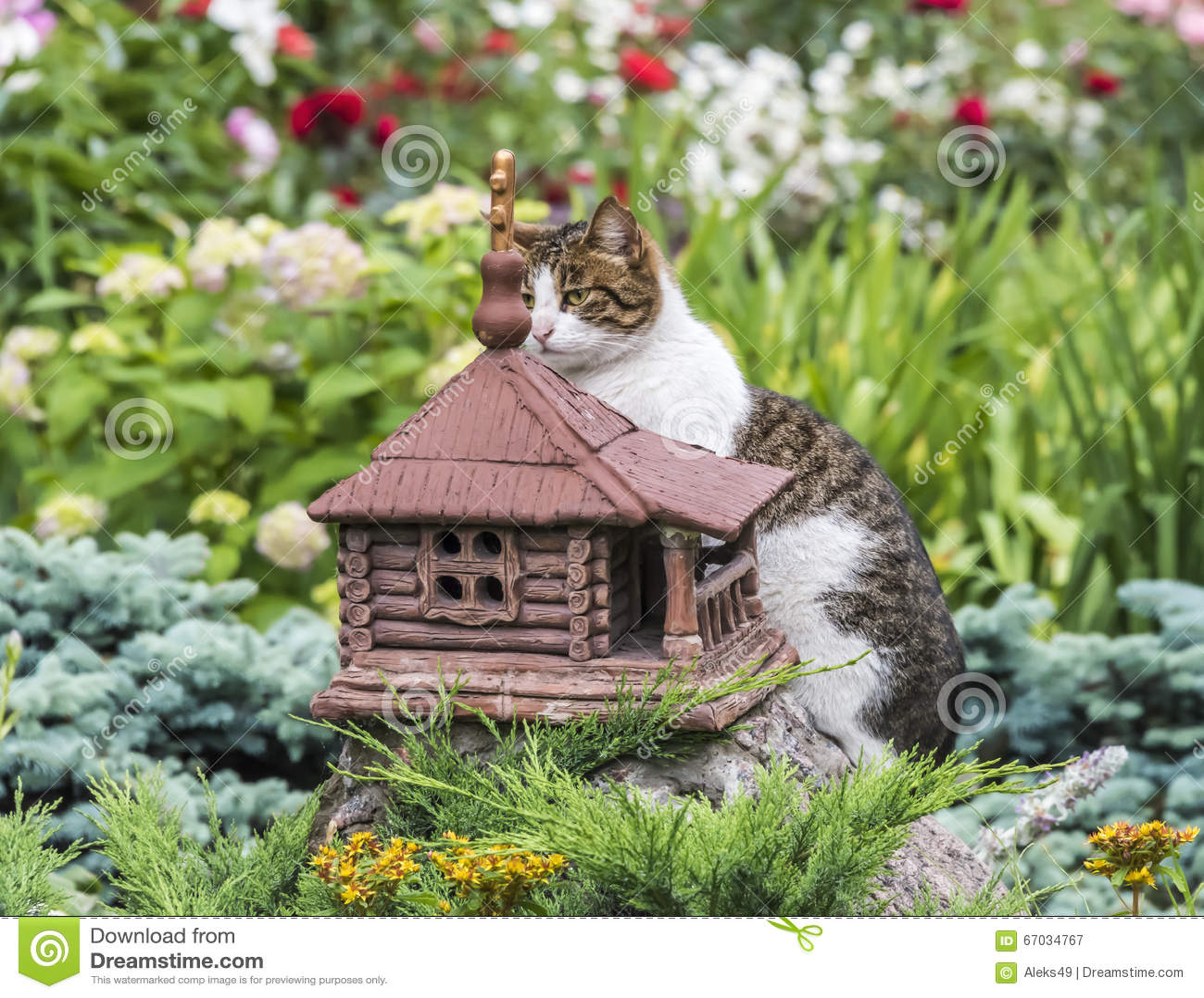 Cat chooses a new home