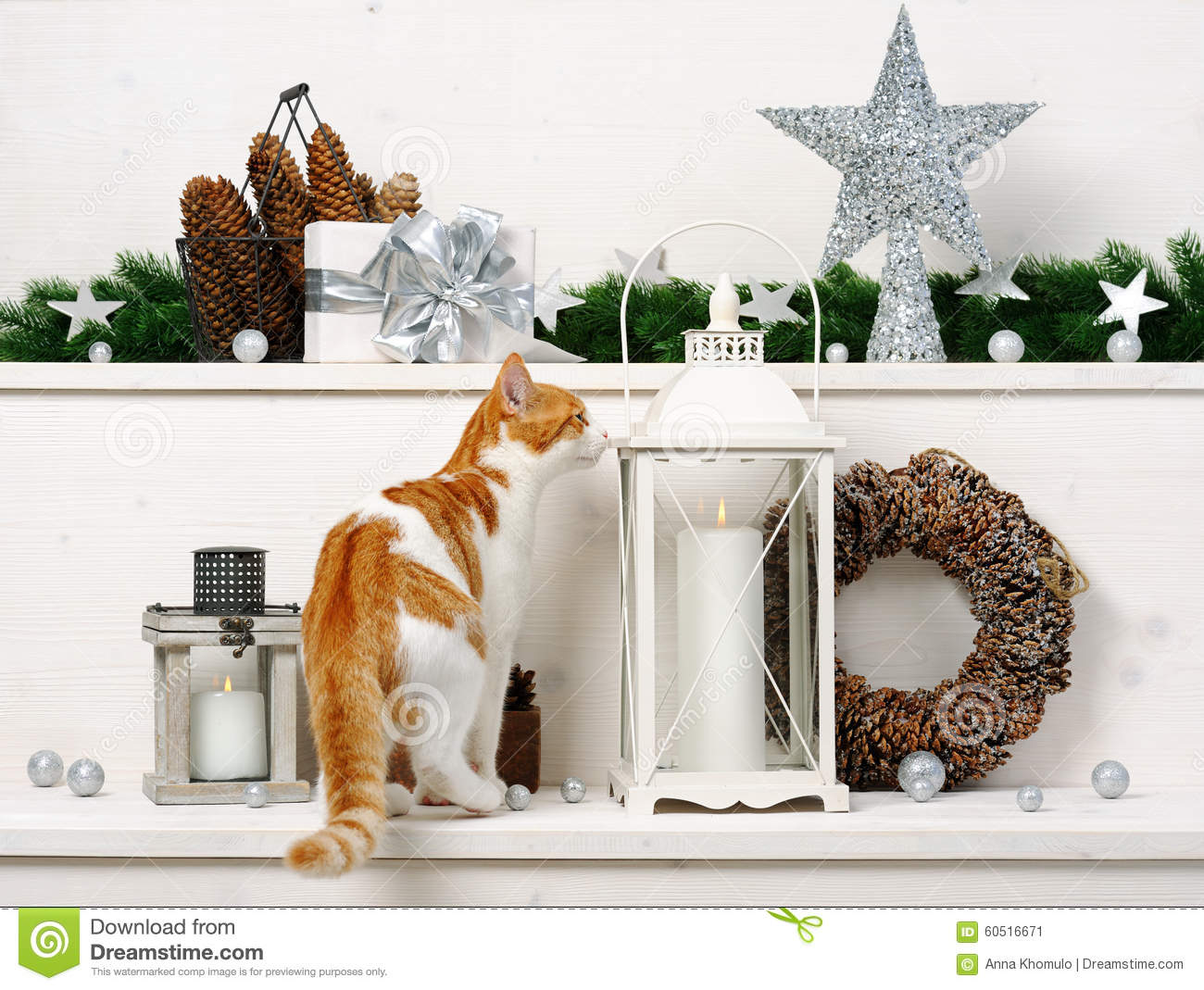 Cat and christmas decoration stock photo image 60516671 for Christmas cat yard decorations