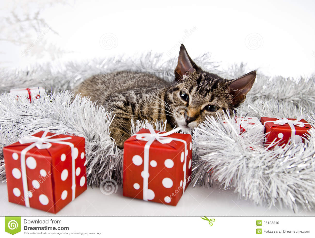 Cat christmas present stock photo image of eves for Decoration on a present