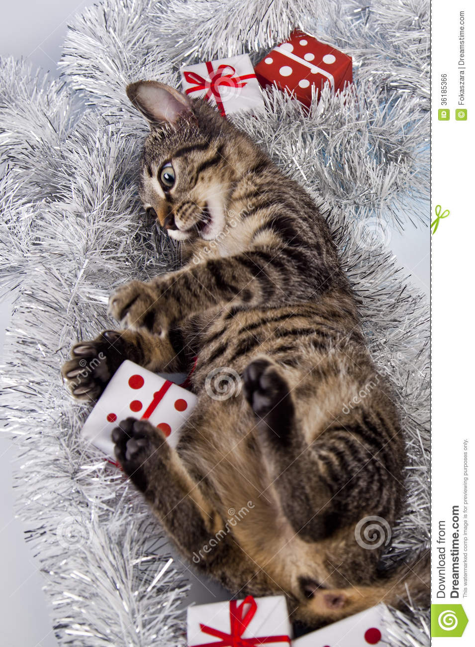 Cat, Christmas, Present Royalty Free Stock Image - Image: 36185366