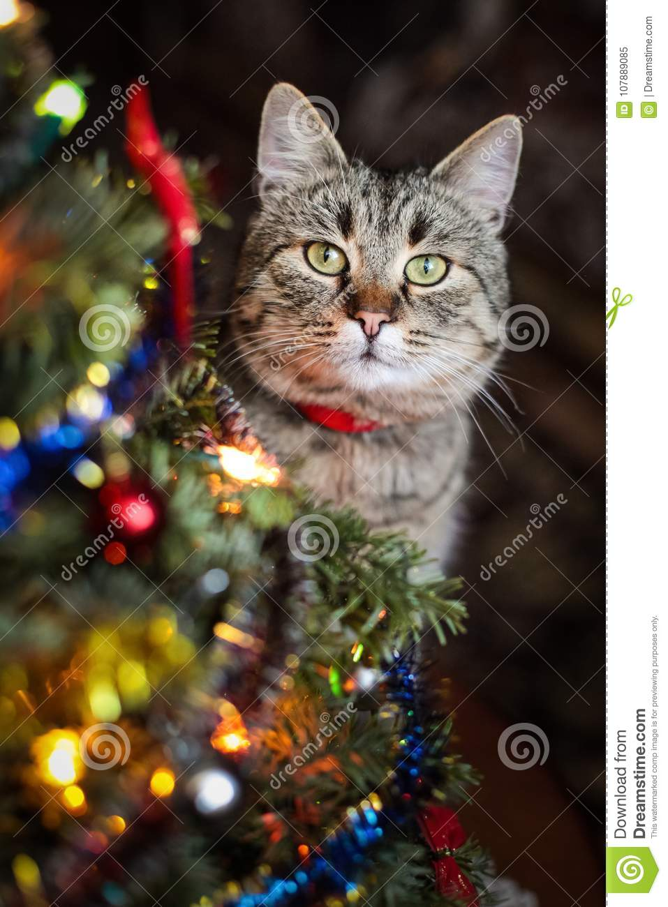 cat with christmas presents and decorations for a christmas tree