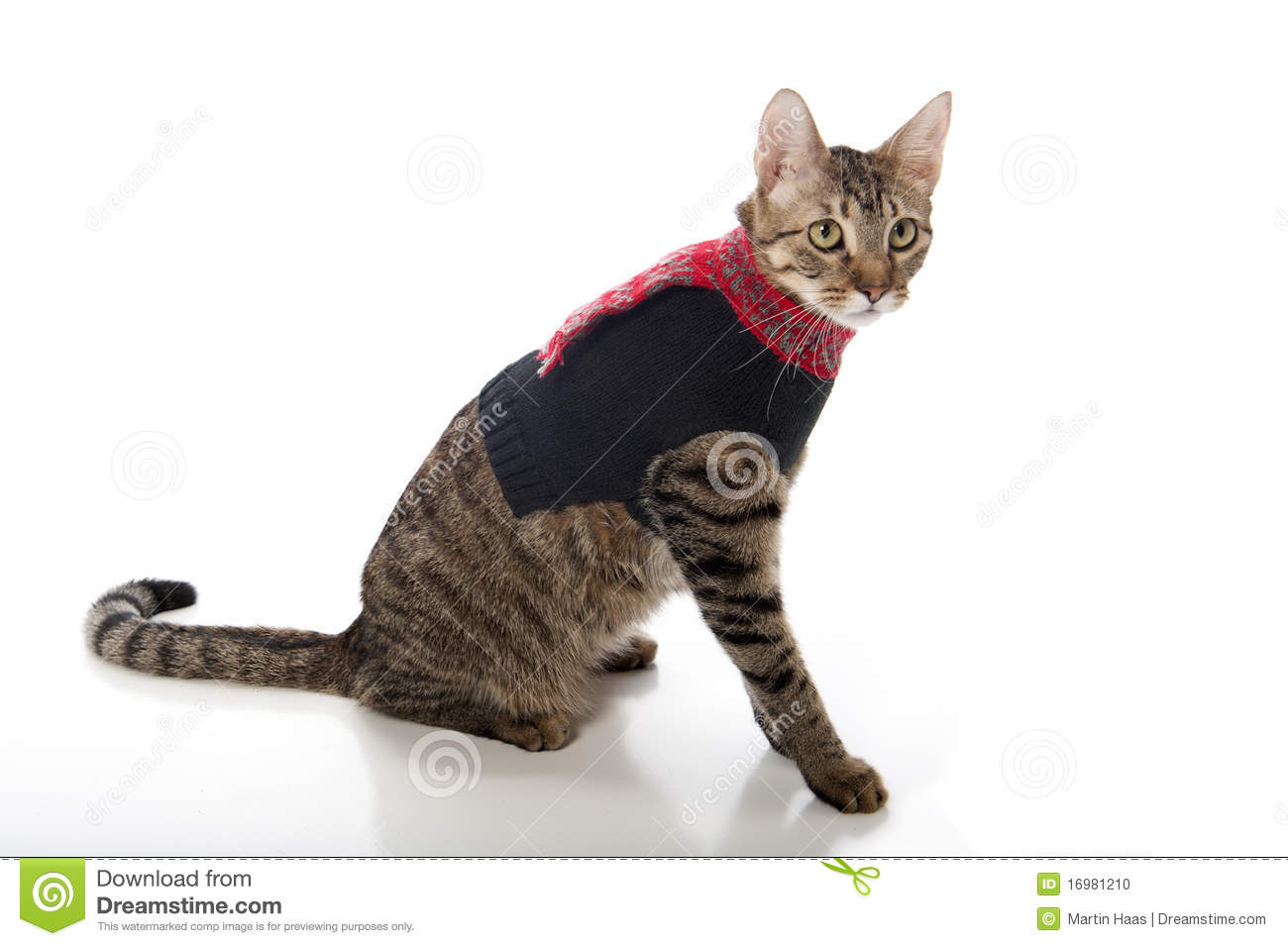 Cat in a Christmas Sweater stock photo. Image of kitten - 16981210
