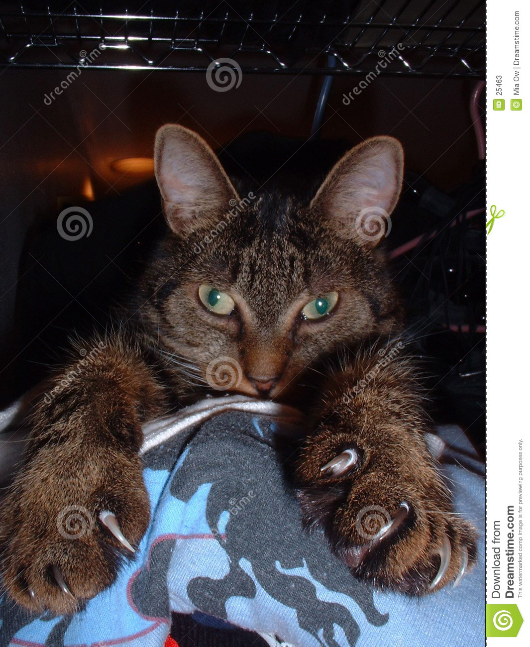Cat with claws 2