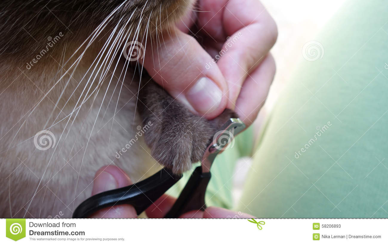 Cat claws cutting stock image. Image of hand, scissors - 58206893