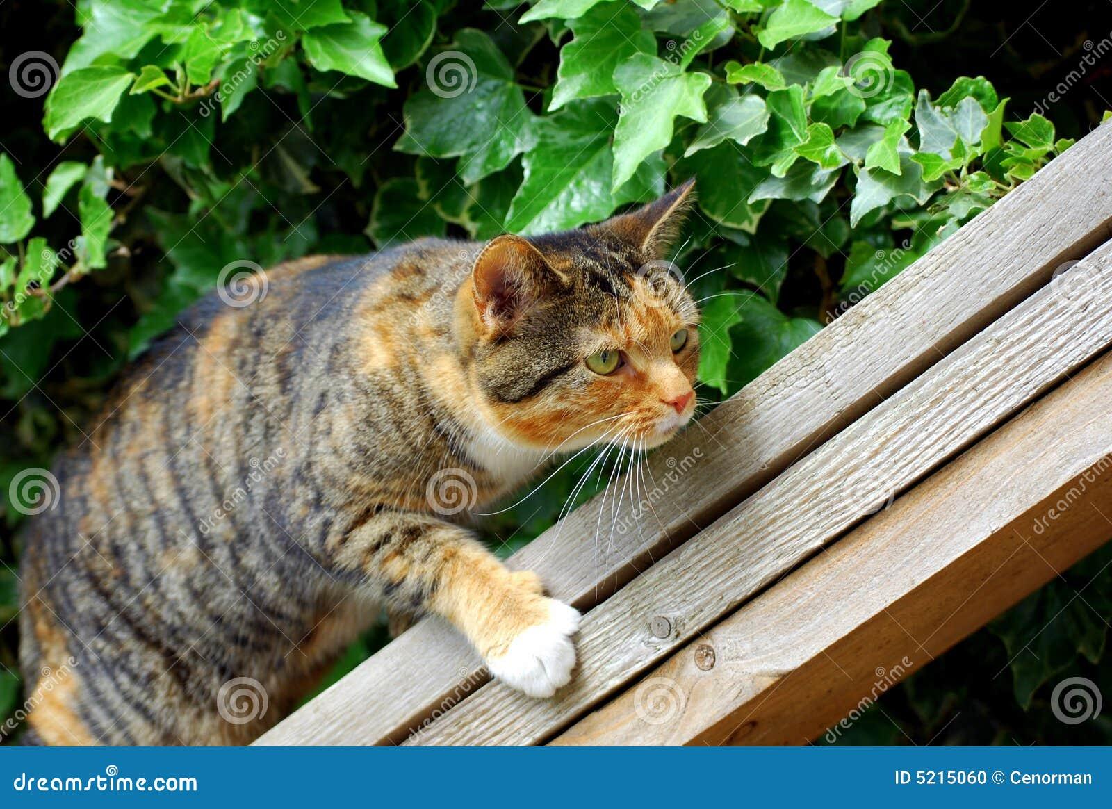 Cat climbing some wood