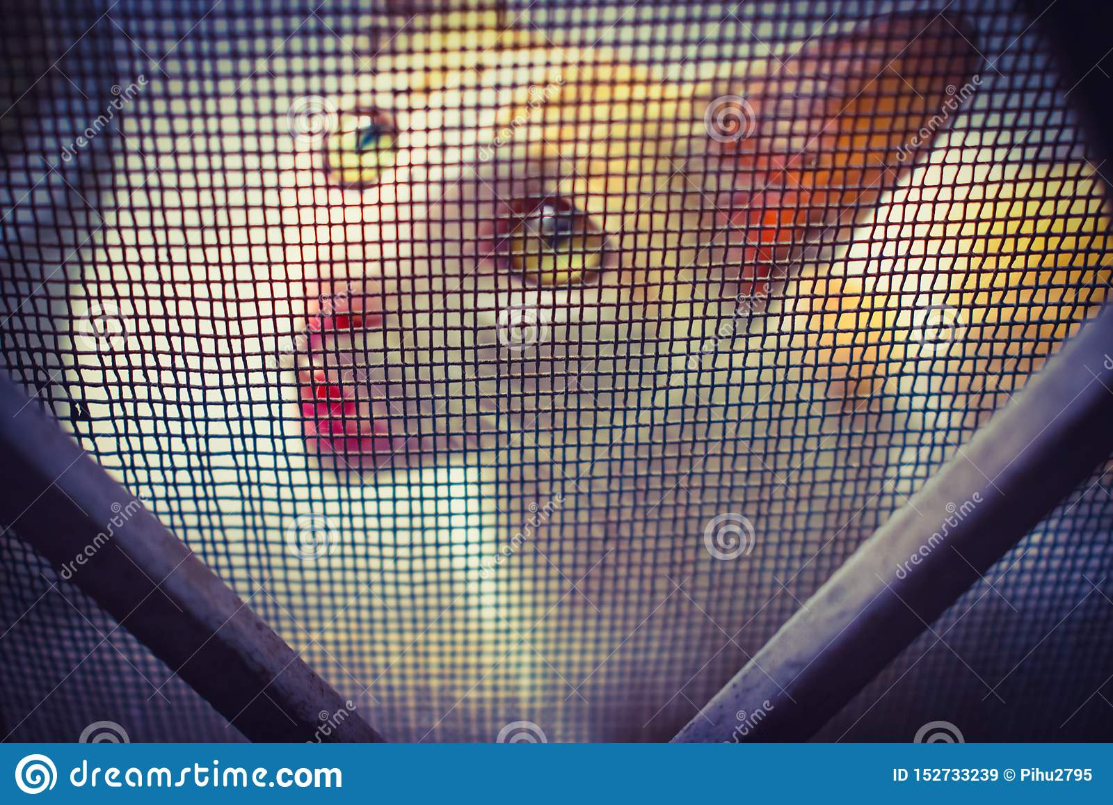 CAT COM A EXPRESSÃO BONITO que olha através da rede de arame