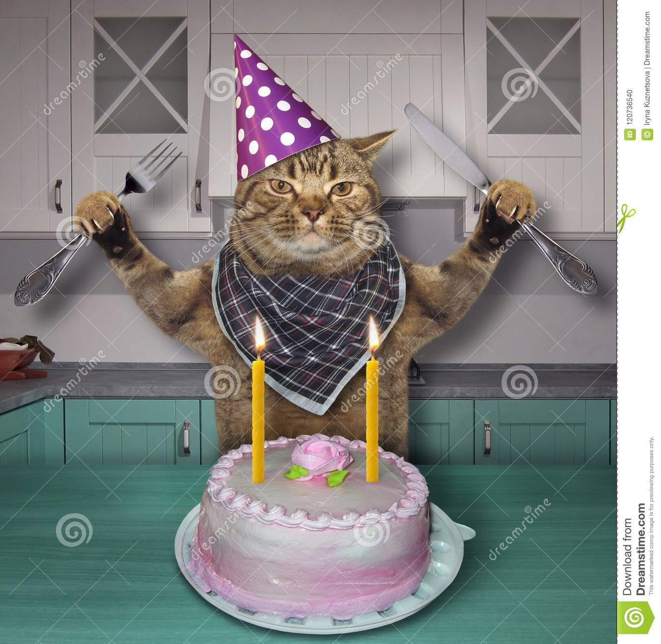 Superb Cat In A Birthday Hat With The Cake Stock Photo Image Of Happy Funny Birthday Cards Online Alyptdamsfinfo