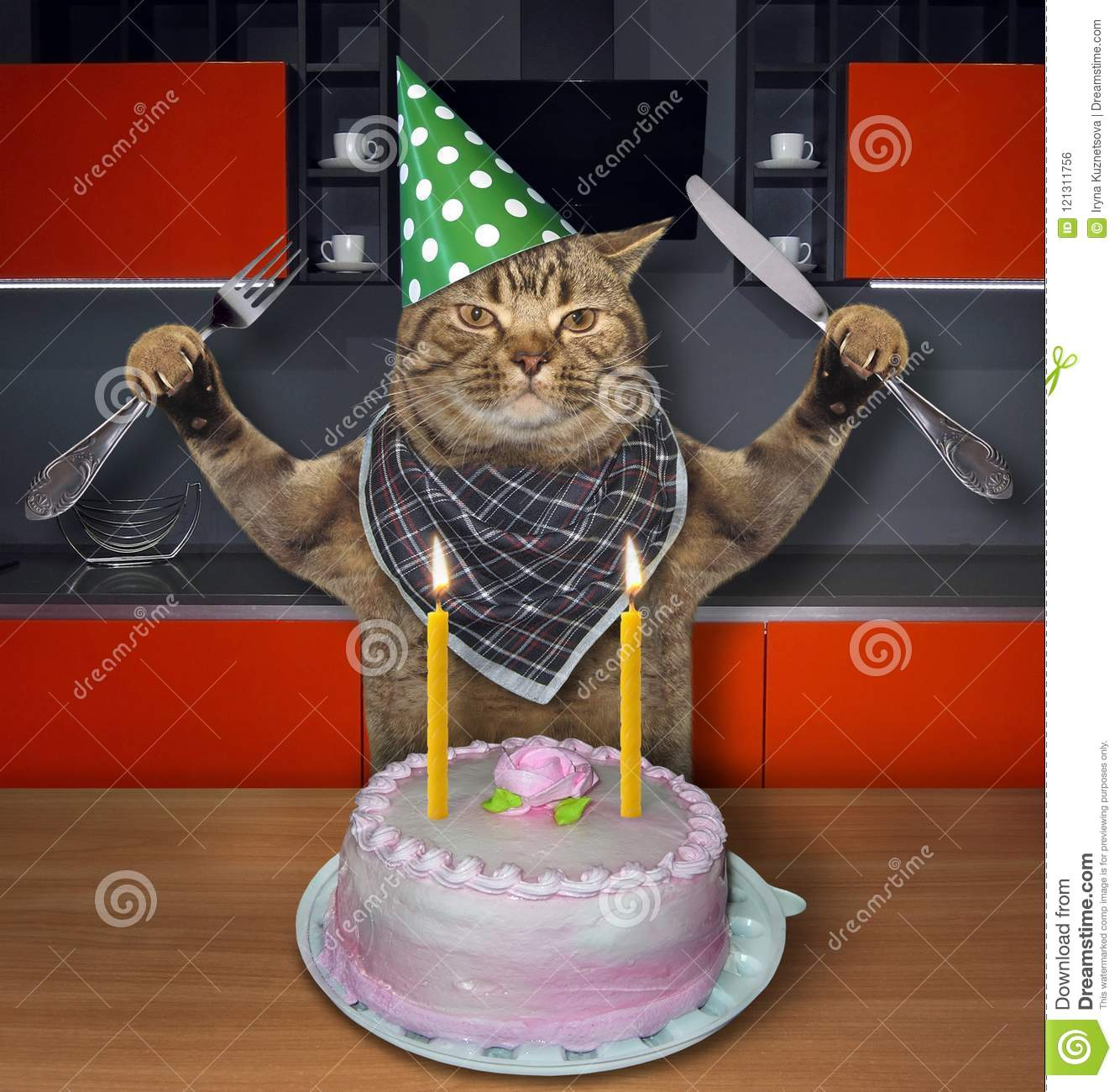 Cat In A Birthday Hat With The Cake 2