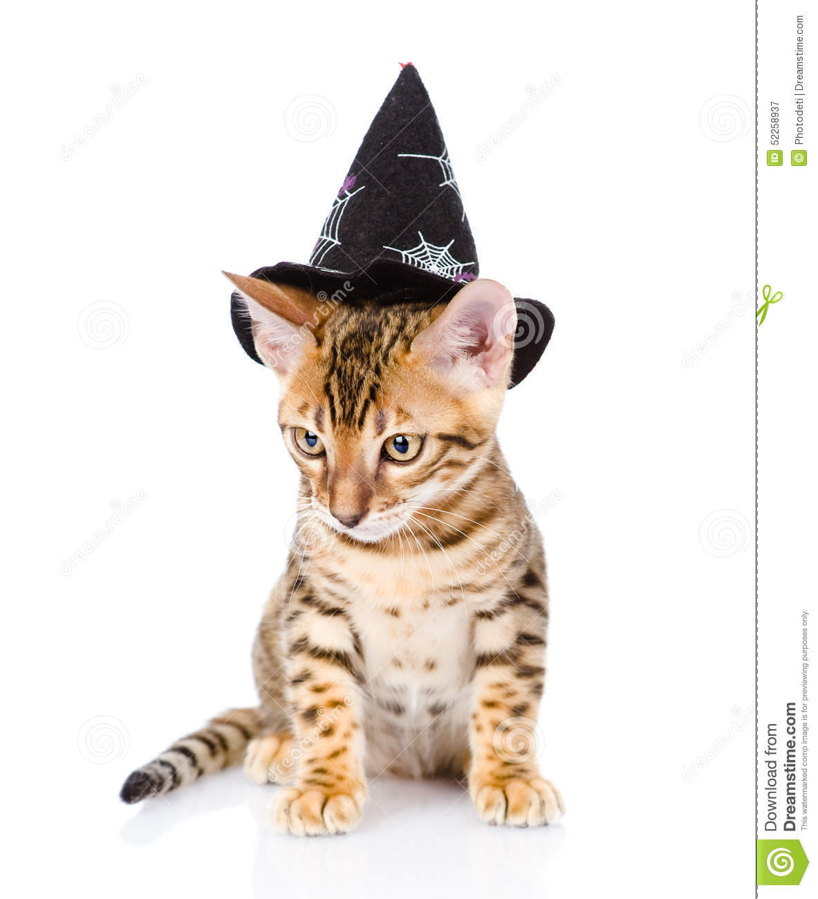 Download Cat In Costume For A Masquerade. On White Background Stock Image - Image of  sc 1 st  Dreamstime.com & Cat In Costume For A Masquerade. On White Background Stock Image ...