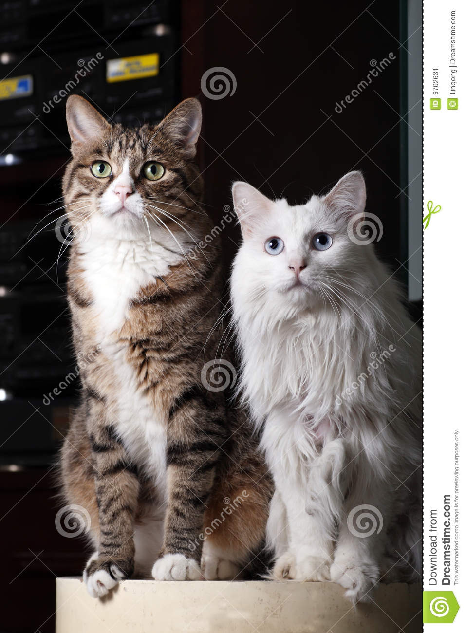 Cat Couples Stock Image - Image: 9702631