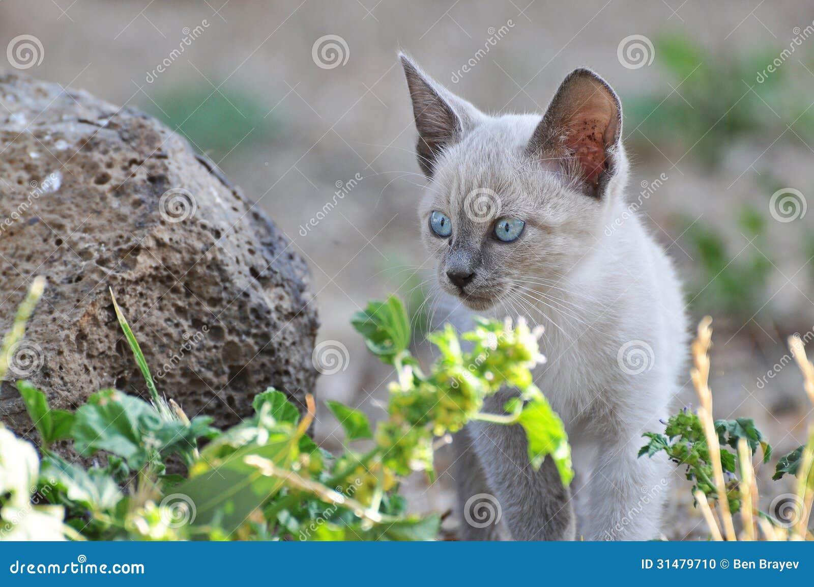 Cat cub