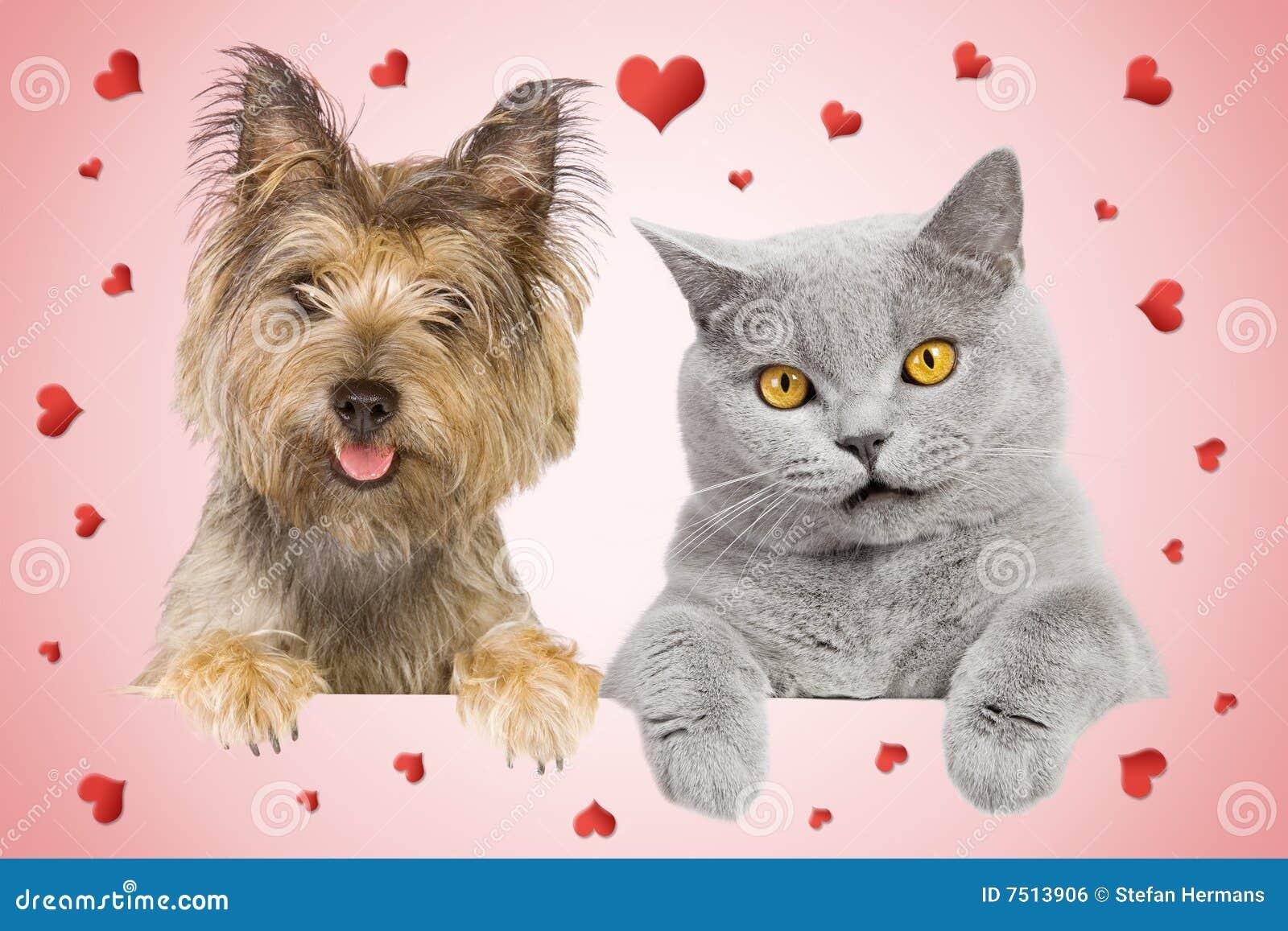 Pink Cat Studio Dog
