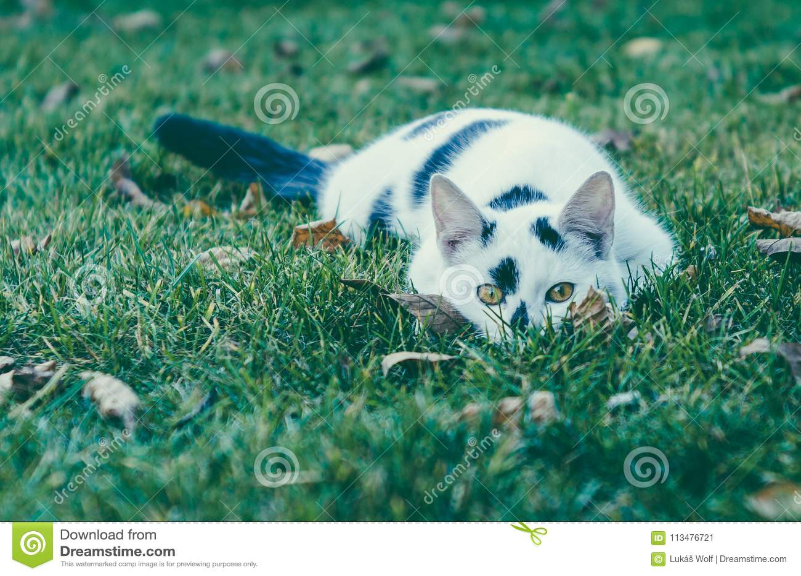 CAT DE WHITE-BLACK Riconar, 55mm, lente f2,2 velha