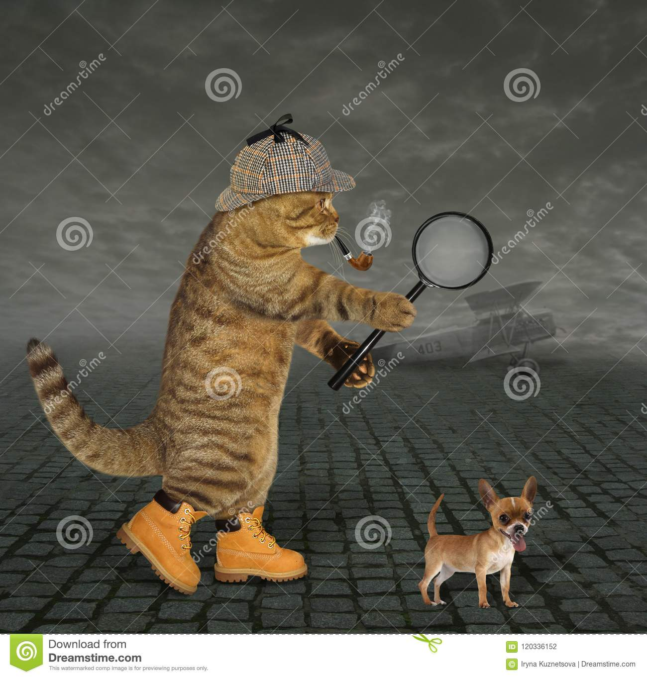 Cat detective at airfield