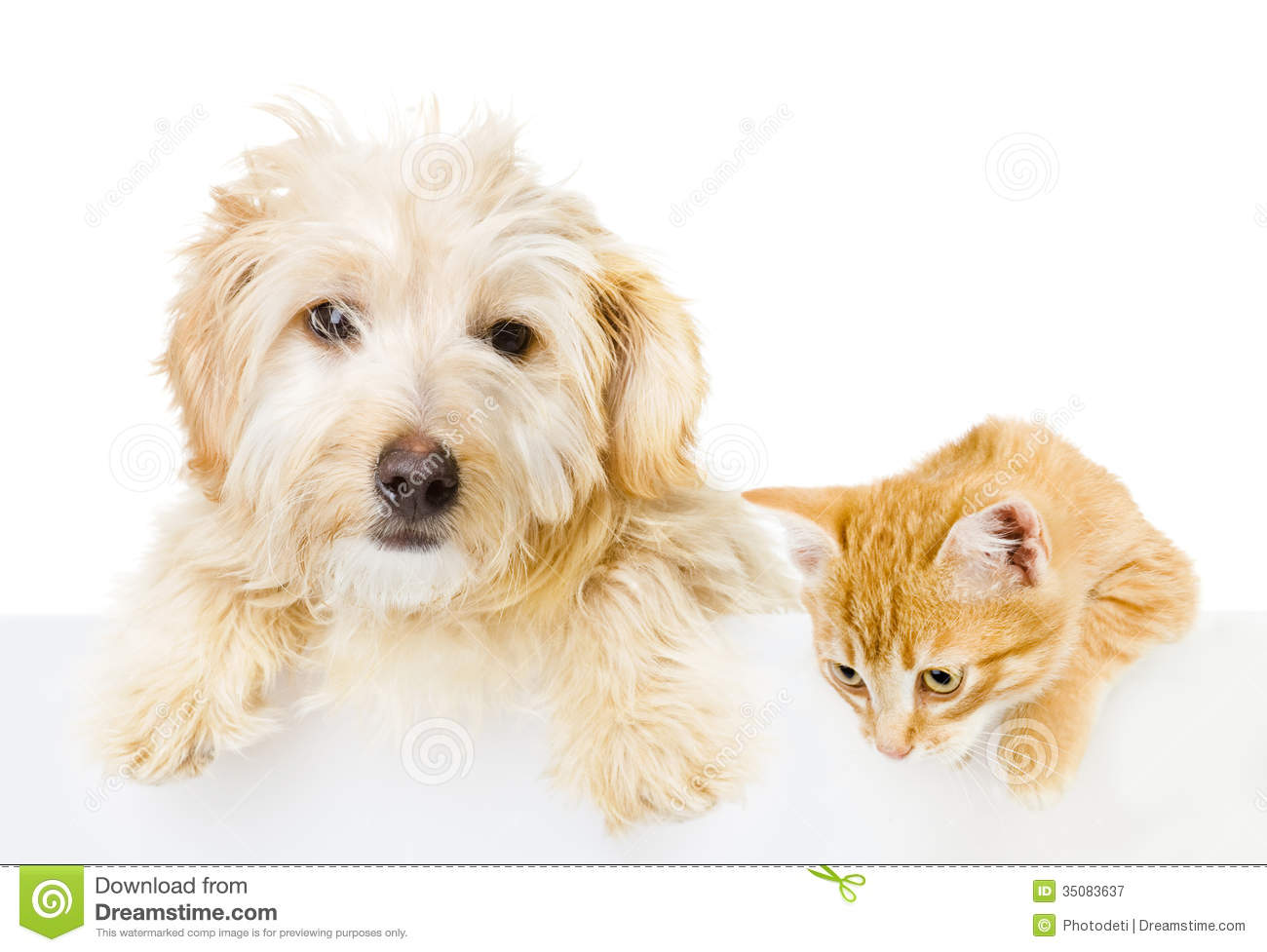 Cat and dog above white banner stock image image of above cat and dog above white banner voltagebd Gallery