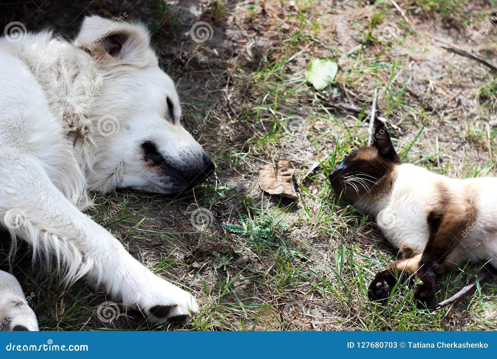 Cat And Dog Are Best von Freunden