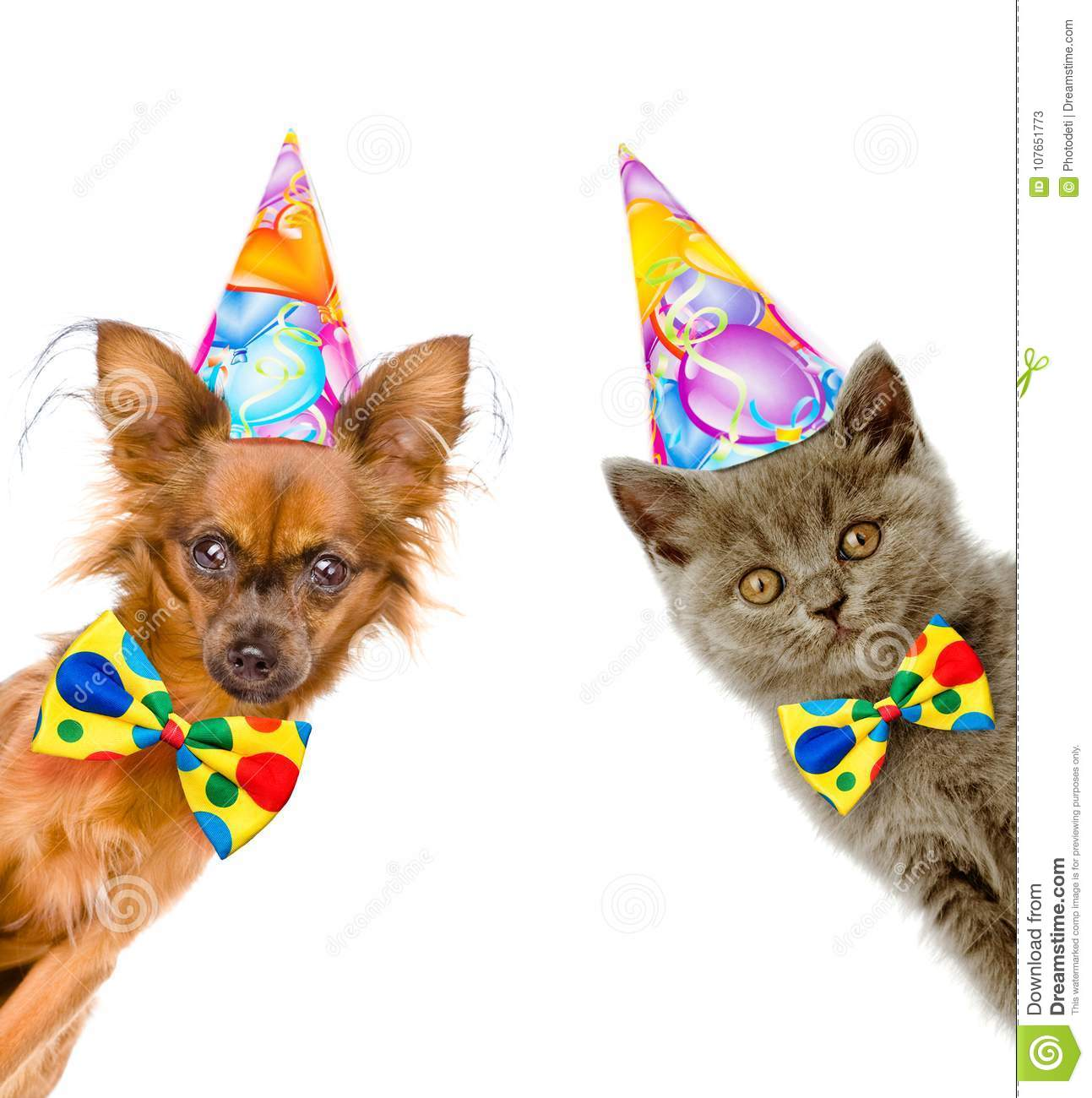 Cat And Dog In Birthday Hats With Bow Tie Look Out From Behind A Banner Isolated On White Background