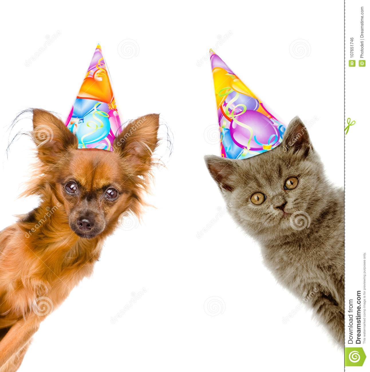 Cat And Dog In Birthday Hats Look Out From Behind A Banner Isolated