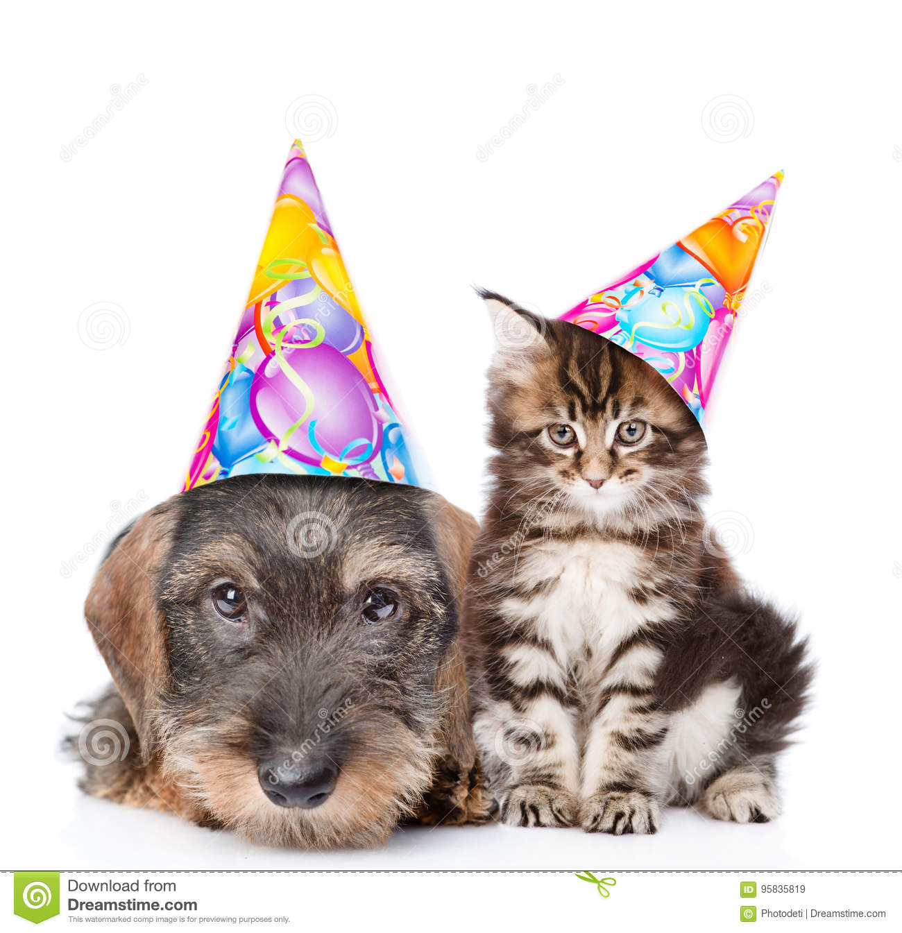 Cat And Dog In Birthday Hats Looking At Camera Together Isolated On White