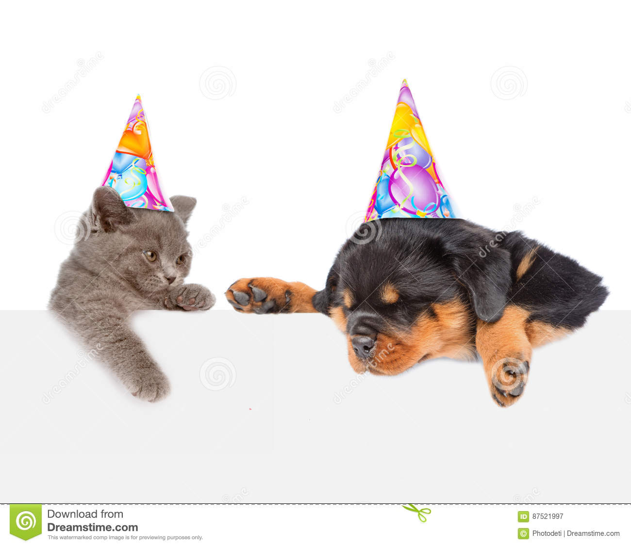 Cat And Dog In Birthday Hats Peeking From Behind Empty Board Loo