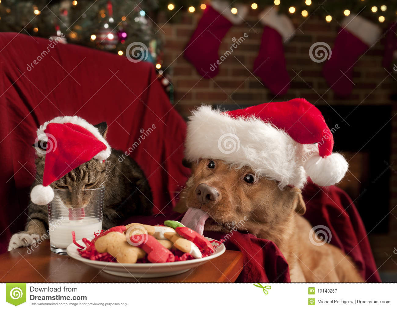 Cat and Dog devouring Santa s cookies and milk