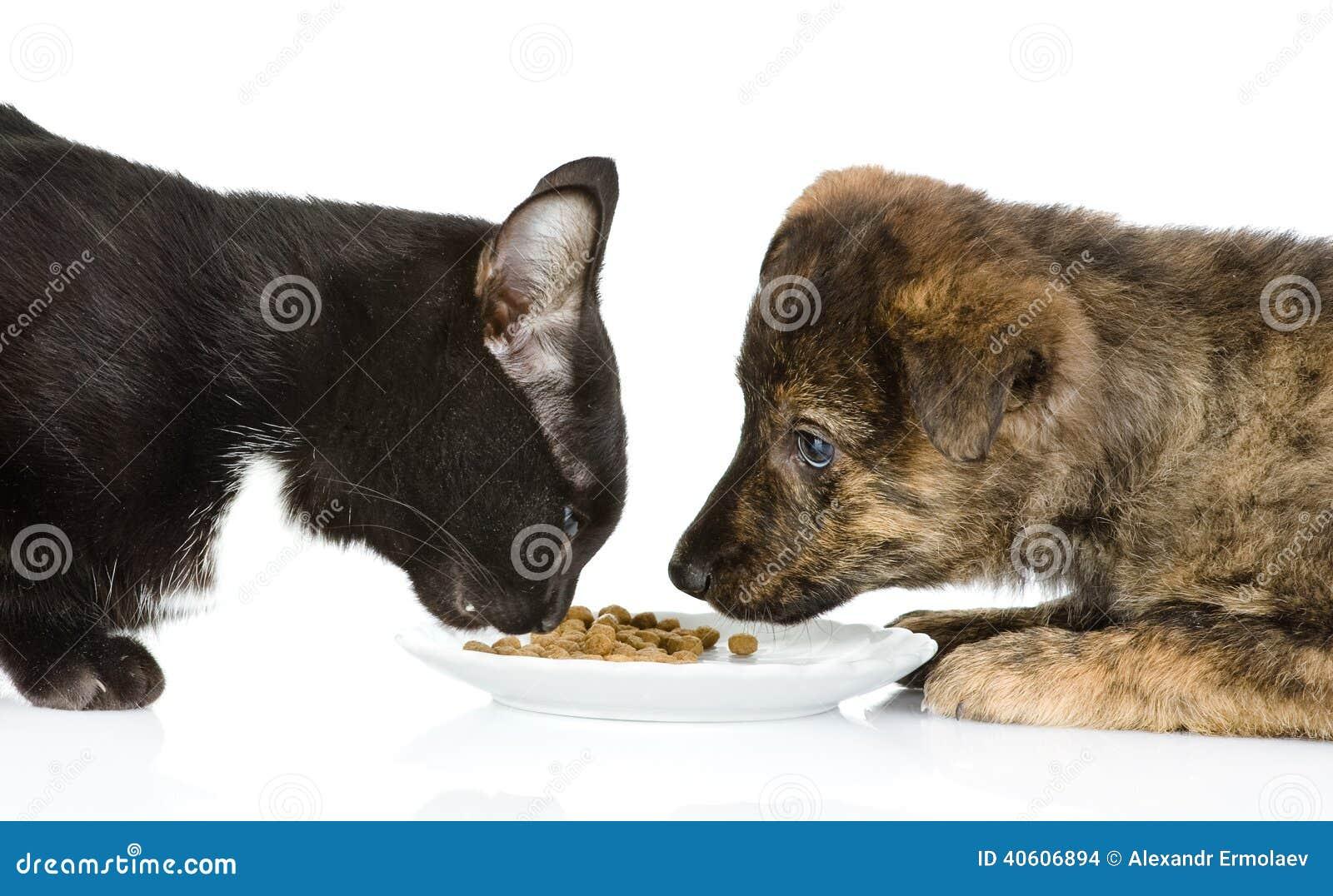 My Cat Keeps Eating Dog Food