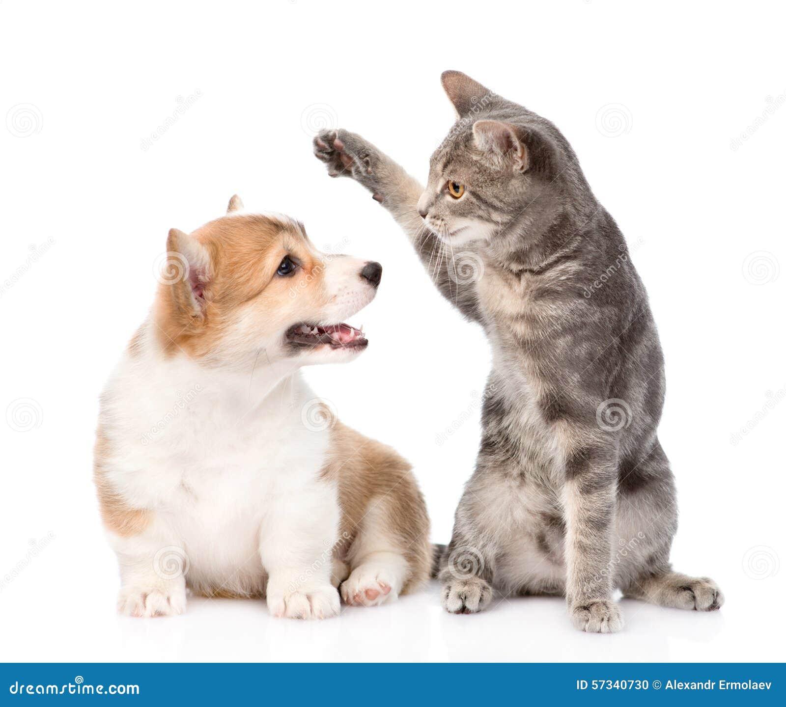 Cat Dog Fight Game