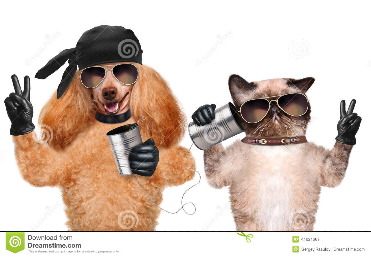 Cat With A Dog On The Phone With A Can Stock Photo Image