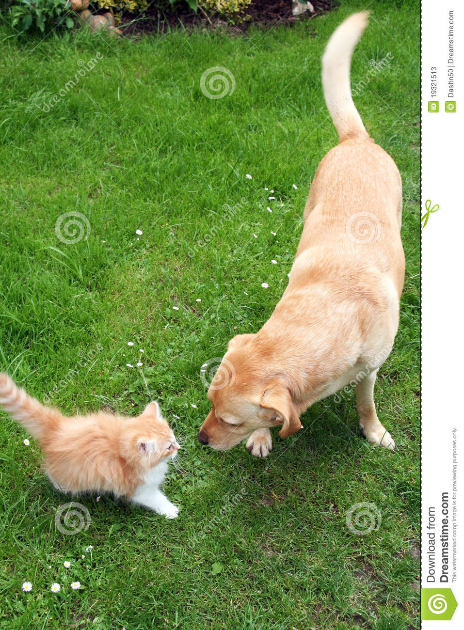 Dog and cat playing together - YouTube |Playing Cats And Dogs