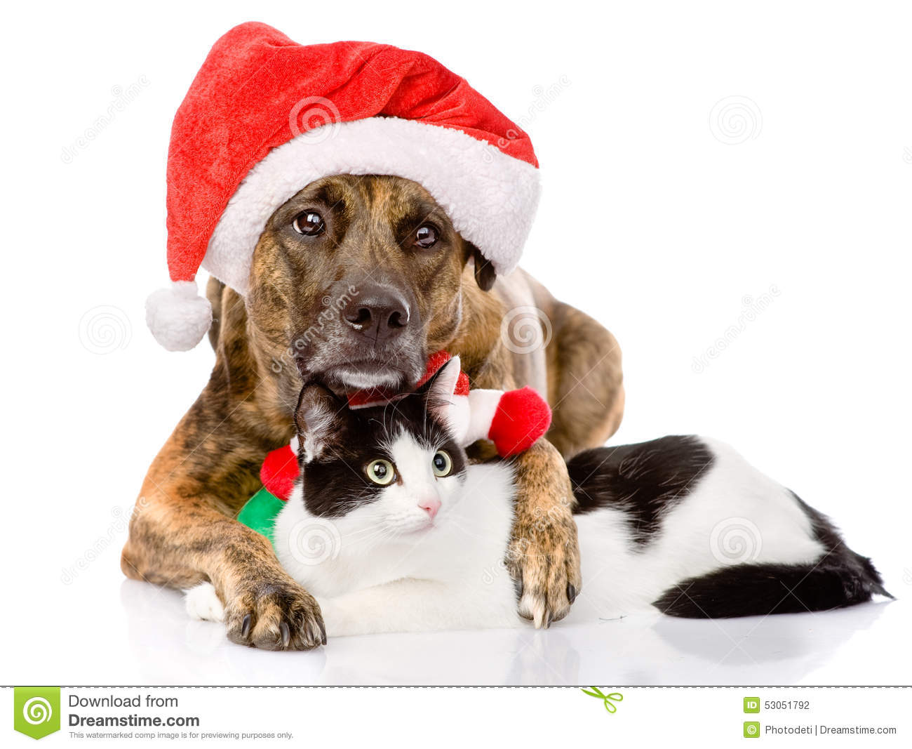 Cat And Dog With Santa Claus Hat Isolated On White