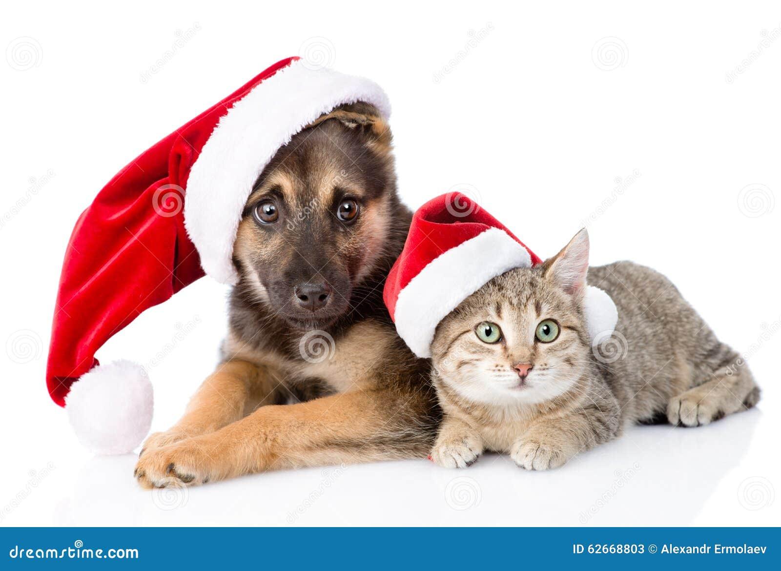 Dog And Cat Holiday White Background Animal