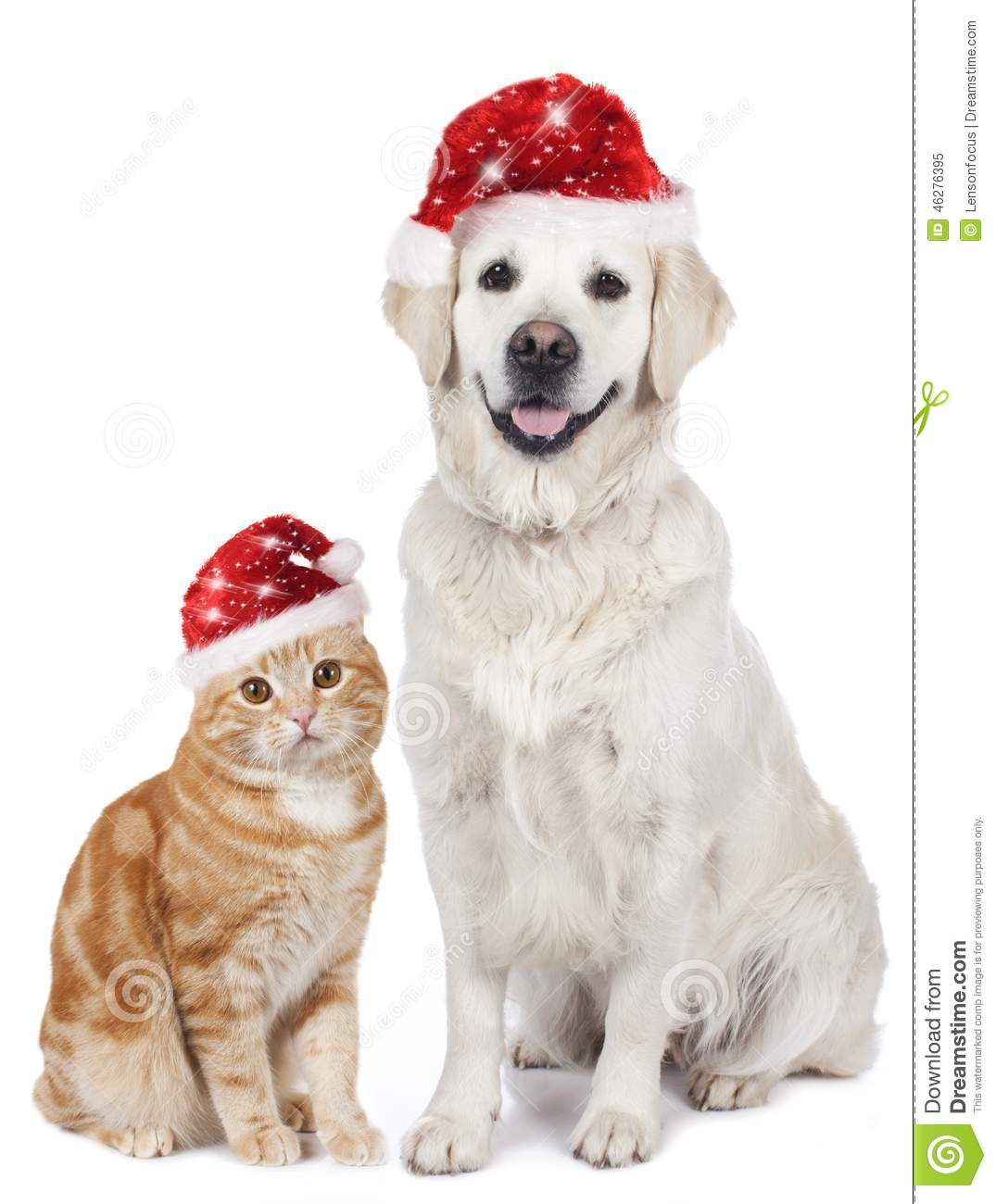 Cat and dog with santa hat stock photo image