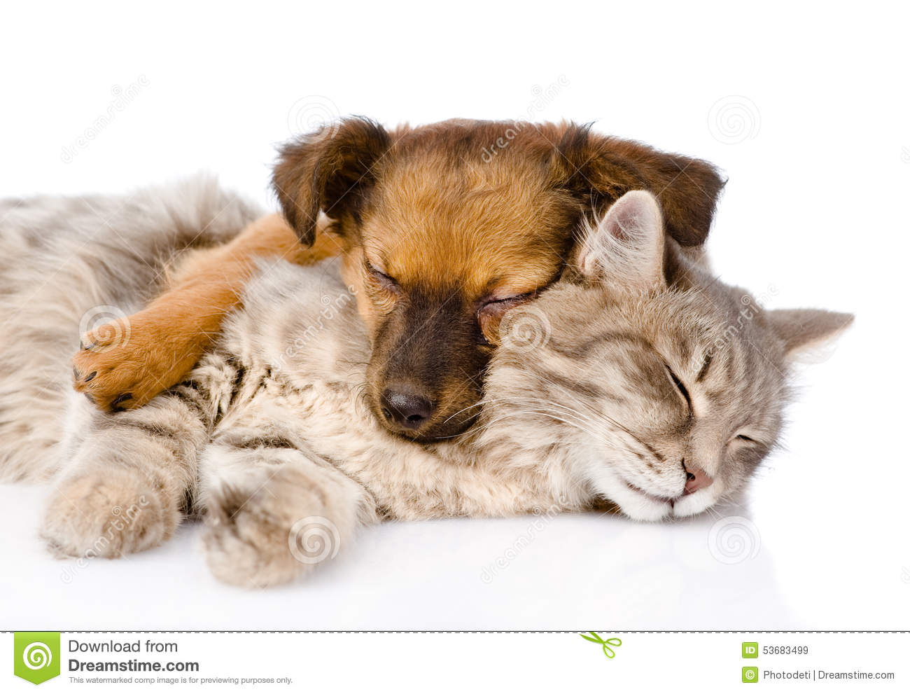 Cat and dog sleeping together. isolated on white background