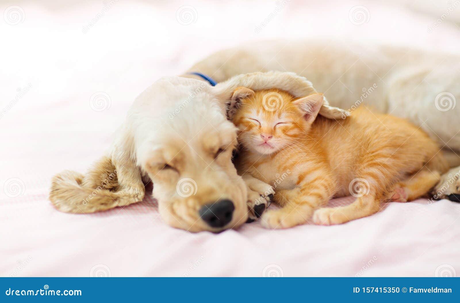 CLIPART SLEEPING KITTEN   Royalty free vector design   Sleeping kitten,  Kitten cartoon, Cat clipart
