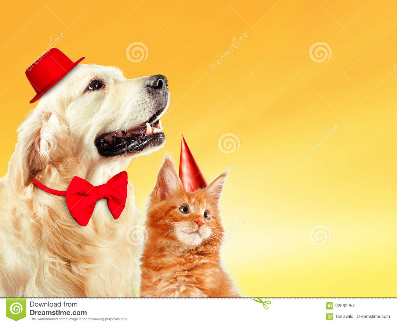 Cat And Dog Together With Birthday Party Hats Maine Coon Kitten Golden Retriever Looks