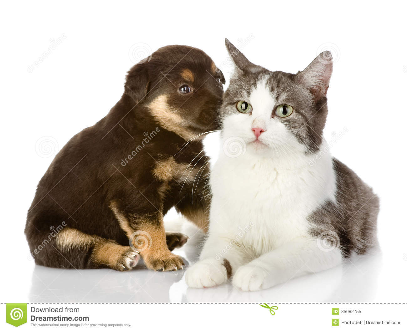 free clipart of dog and cat together - photo #36