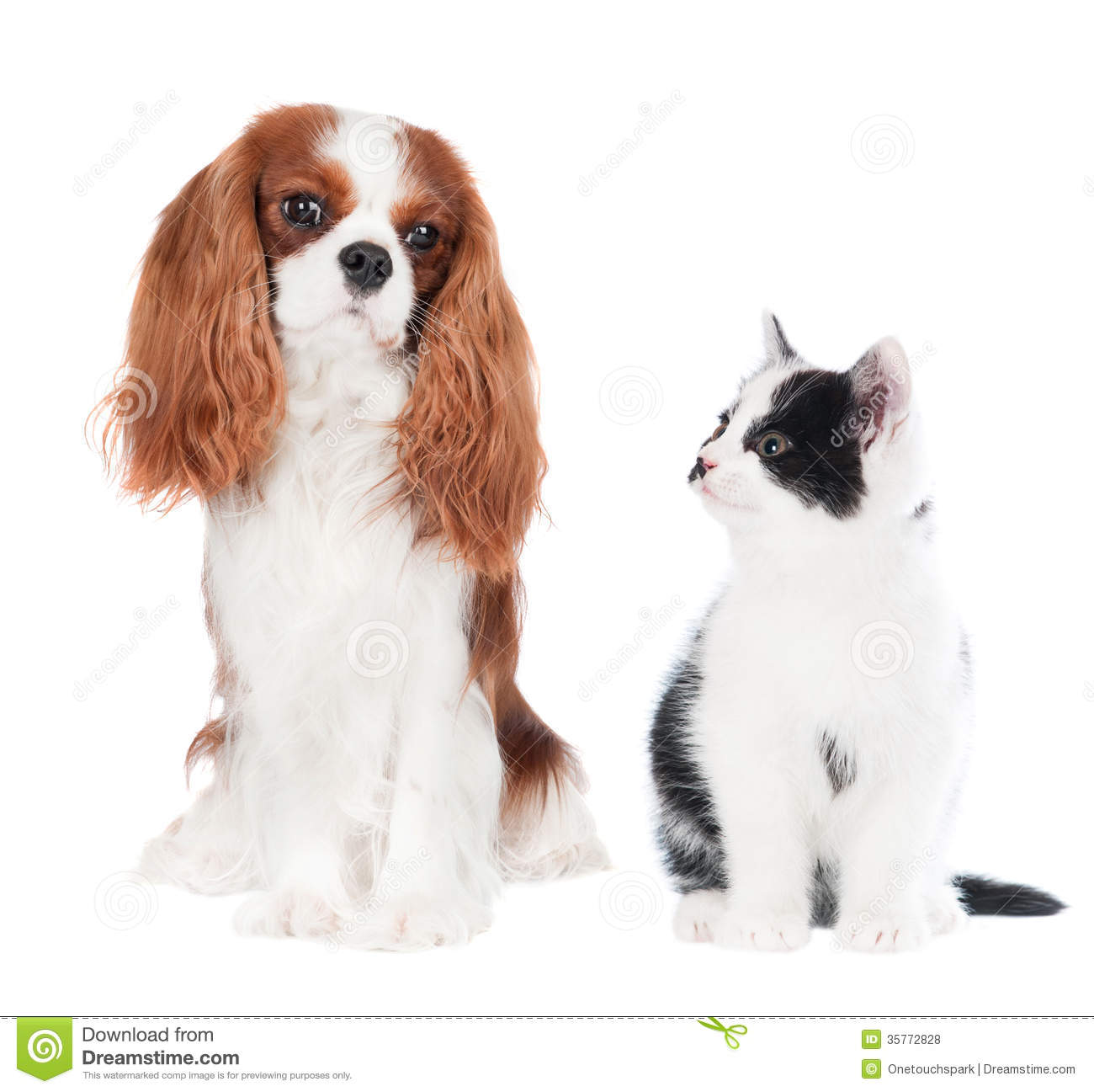 free clipart of dog and cat together - photo #30