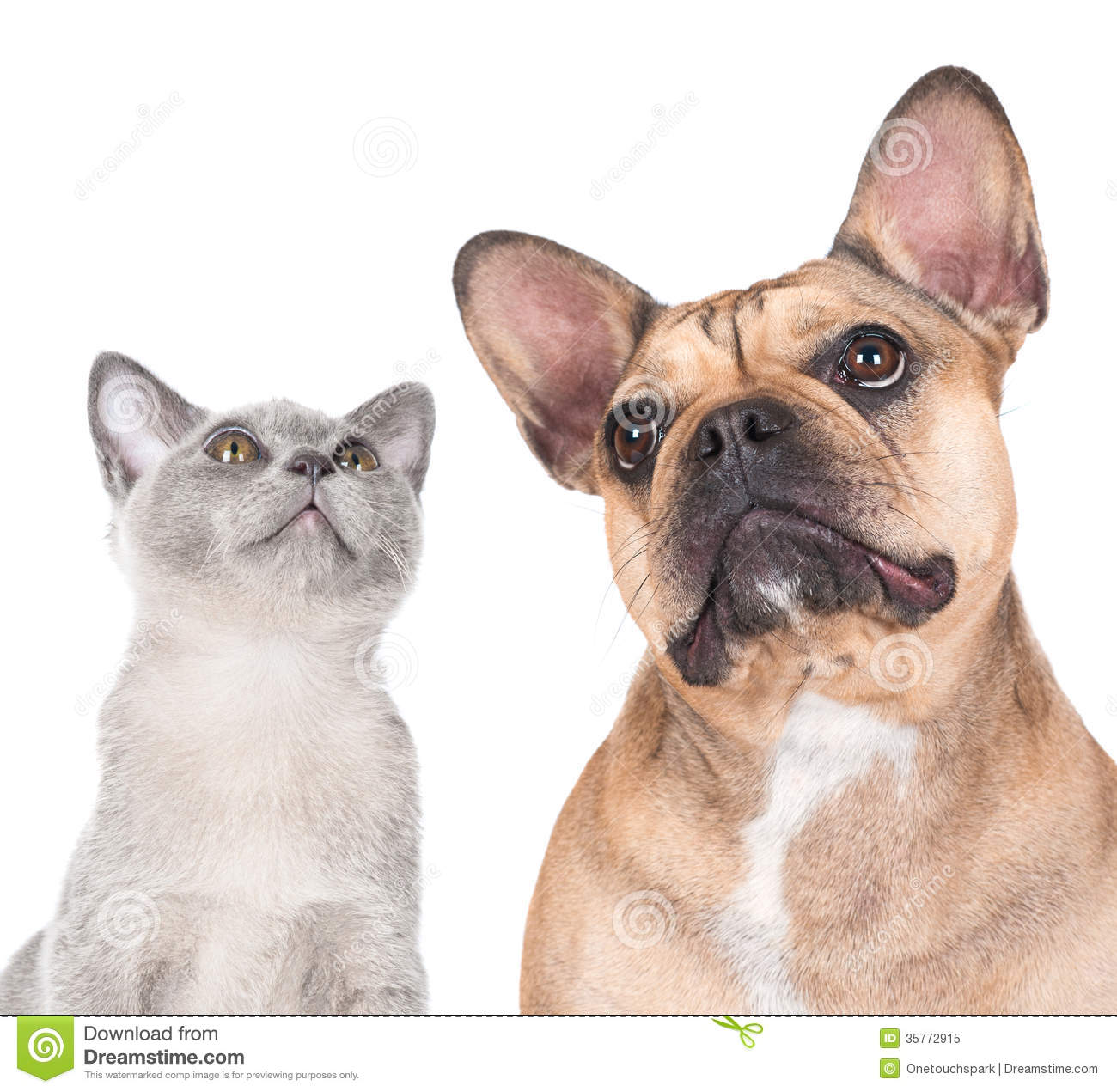 free clipart of dog and cat together - photo #28