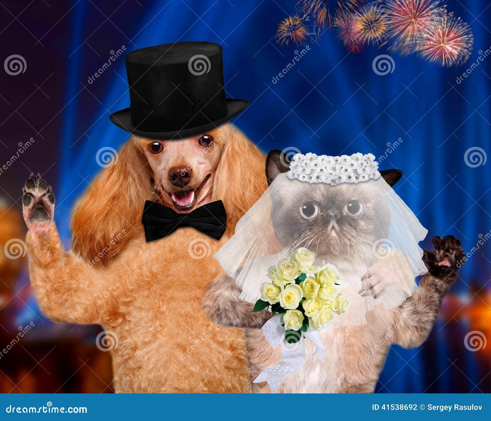 cat and dog wedding stock photo image of joke
